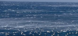 독도를 품고 있는 동해의 겨울바다와 괭이 갈매기들